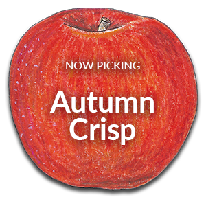 Now Picking Autumn Crisp