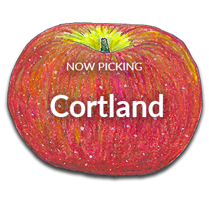 Now Picking Cortland