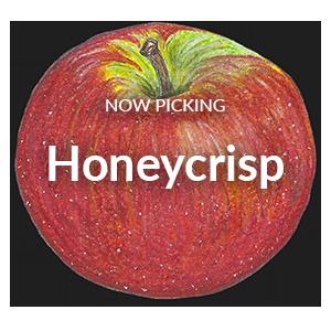 Now Picking Honeycrisp