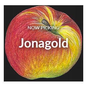 Now Picking Jonagold