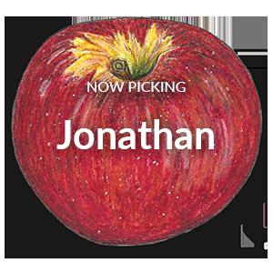 Now Picking Jonathan