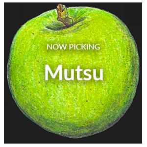 Now Picking Mutsu