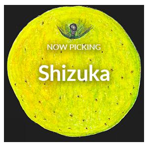 Now Picking Shizuka